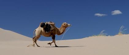 camel-692648__180